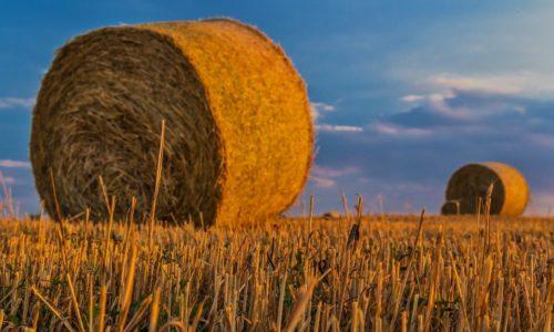 PW – La viande cultivée et l'agriculture wallonne ?