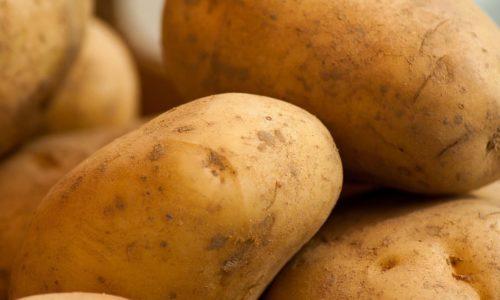 PW – L'interdiction européenne du CICP : quel impact pour les cultivateurs wallons ?