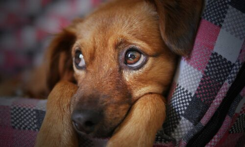 PW – La maltraitance animale