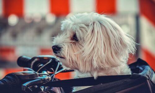 PW – La livraison d'animaux en ligne